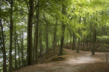 Forest in Denmark