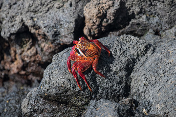 Galapagos Santa Cruz Island, Equador