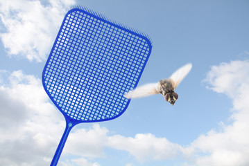 blue flyswatter hunting  a flying fly against a blue sky with clouds, copy space, motion blur, selected focus, narrow depth of field