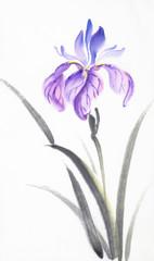 bright lilac iris