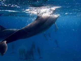 Dolphin Tail underwater