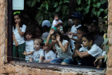 Children look on as Lion Nene and Lioness Valentina are used at Medellin zoo in Colombia, in an attempt to predict the result of the upcoming group H 2018 FIFA World Cup match between Colombia and Japan held in Russia