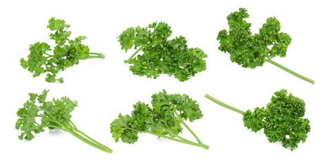 set of parsley isolated on a white background
