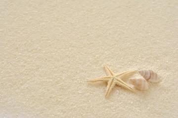貝殻 ひとで  白い砂