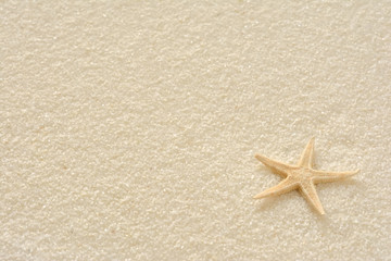 ひとで  白い砂