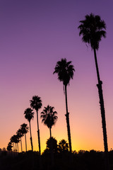 Beautiful vivid sunset with silhouette of Palm trees