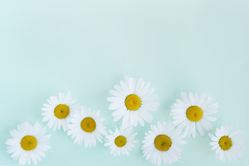 Composition frame of white chamomile  flowers on a green, mint, tiffany color background, top view, creative flat layout.