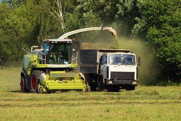 Agriculture, harvesting season - new white harvester close - up of harvesting silage in a flatbed truck on a green field in the summer afternoon against the forest, front side view
