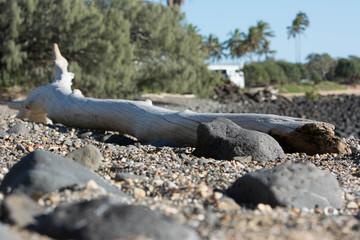 Driftwood washed up on shore along Queensland coastline