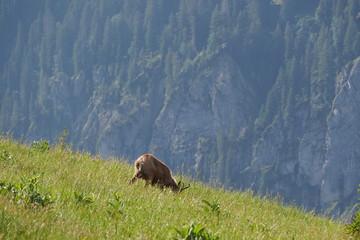 Naturerlebnis Klammspitze - Hirschwang Ammergebirge
