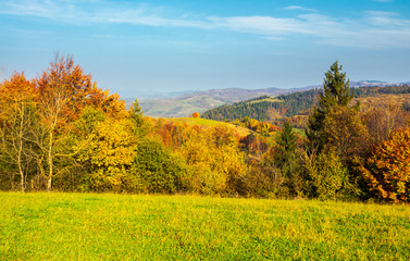 forest on grassy meadow in autumn at sunrise. forested mountains in the distance. colorful foliage on trees