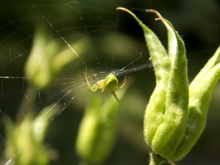spider web and spider on the plant