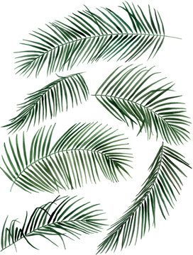 Hand drawn watercolor palm leaves illustration