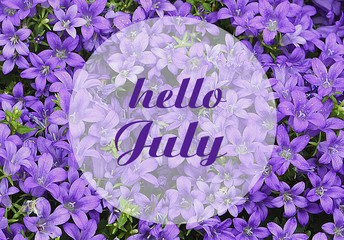 Hello July greeting on natural campanula flowers background.Summer concept. Selective focus.