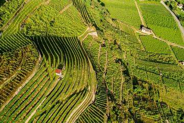 Castionetto di Chiuro - Valtellina (CH) - Vista aerea panoramica con vigneti