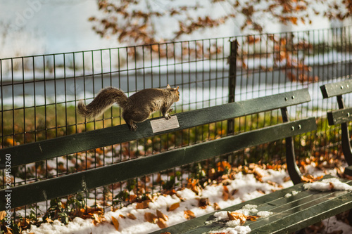 Squirrel On A Park Bench In Central Park New York Stock Photo And