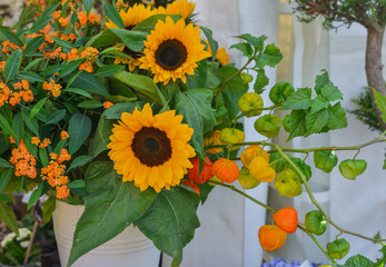 Bouquet of sunflowers and physalis