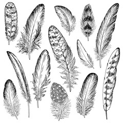 Feathers sketch set. Hand drawn vector illustration.