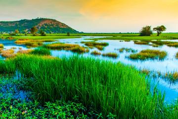 Sunset in rice fields, near Phnom Krom, Sieam Reap, Cambodia