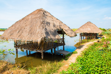 Lotus flowers field and farm with huts near Phnom Krom, Siem Reap, Cambodia