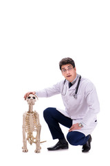 Doctor with dog skeleton isolated on white background
