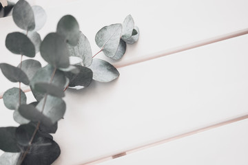 Eucalyptus on white table. Minimalism flat lay composition for bloggers, artists, social media,  magazines. Copyspace, horizontal