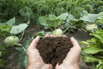 Kompost - Naturdünger in der Hand