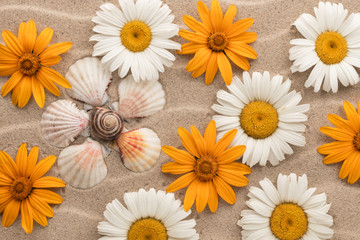 Conceptual daisy made of seashells among the daisies, lying on the sand.