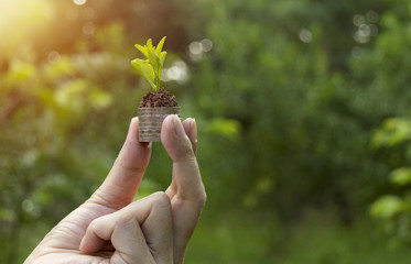 close-up hand of person holding coin with soil and young plant on the top in soft nature background.