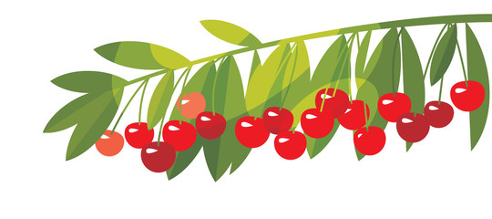 Rape cherry fruit simple flat design element.