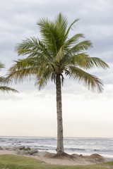 Landscape with palm tree and the sea line