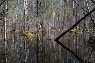 Over flooded meadow bog forest in spring. Europe. Flood plain swamp