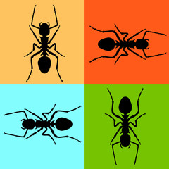 ant vector illustration black silhouette set front