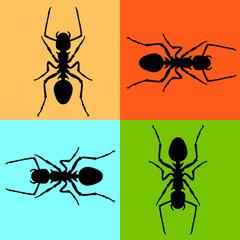 ant vector illustration black silhouette set front