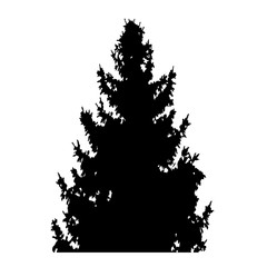 fir-tree with cones silhouette isolated on white background vector illustration