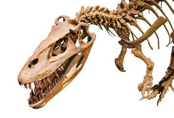 Dinosaur skeleton over white isolated background