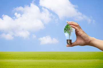 recyclable environment human hands holding big plant tree in light bulb with