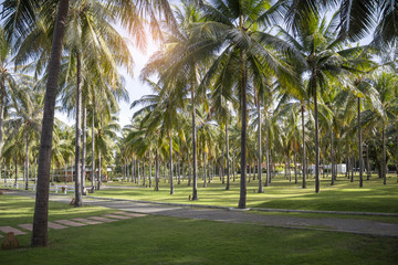 View of coconut palms in resort.