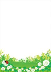 シロツメクサ 草原