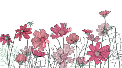 Hand drawn pink cosmos flowers with leaves