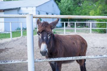 Donkey on a farm, near a barn