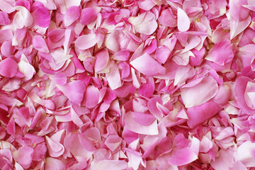 Petals of tea roses background