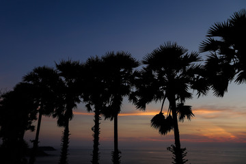 Palms silhouette in sunrise sky and sea landscape. Concept of exotic calm night background photo.