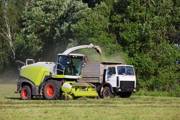 Agriculture, harvesting time - new white harvester close - up of harvesting silage in a flatbed truck on a green field in the summer afternoon against the forest, front side view