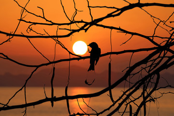Silhouette of birds on a tree branches with red sky sunset background