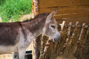 Esel steht an einer Futter-Stallung