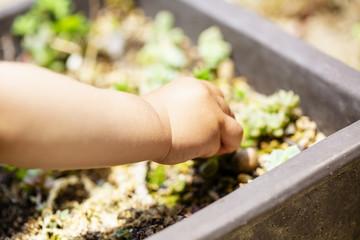 鉢植えの植物と子供の手