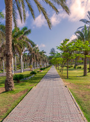 Pedestrian walkway framed with trees and palm trees on both sides with partly cloudy sky in a summer day, Montana public park, Alexandria, Egypt