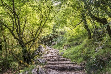 wood forest road with stone stairs