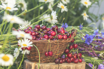 Beautiful summer background with cherries and flowers. Sunlight, sunset.